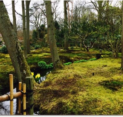 Moss ParadiseMoss Paradise